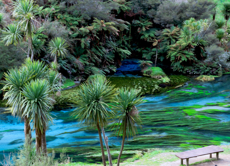 The Blue Spring at Te Waihou Walkway
